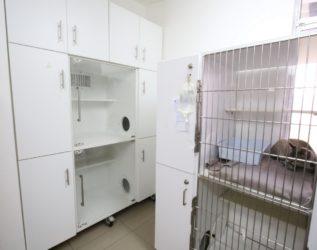hospitalizacion-gatos-Copiar